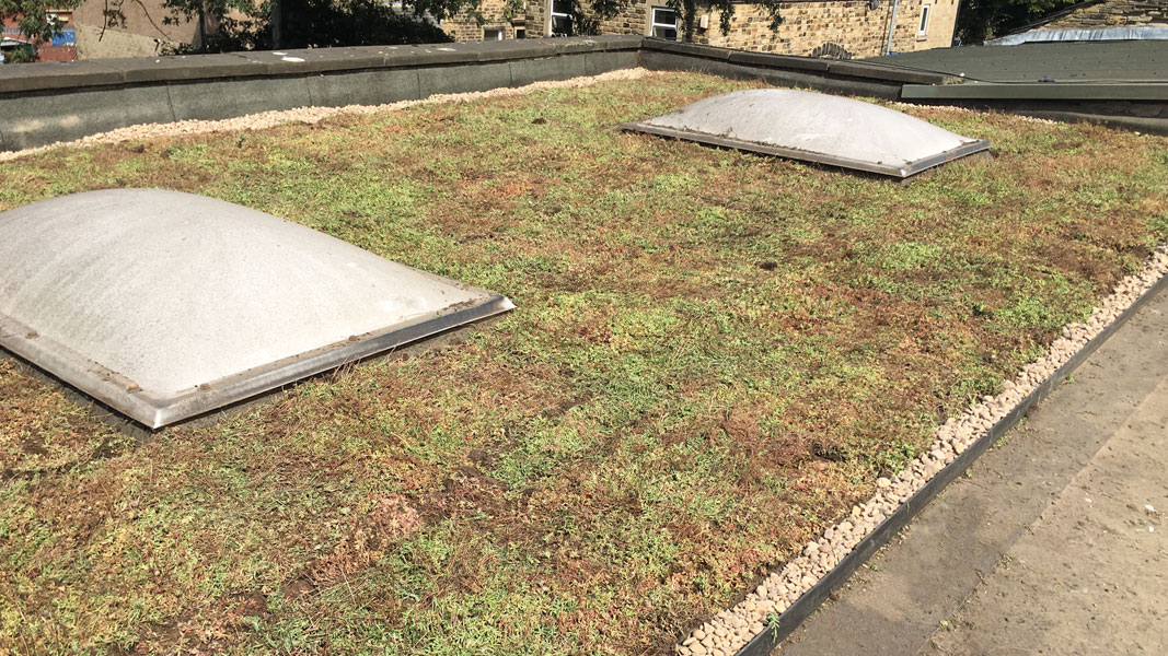 Grass Roof Image